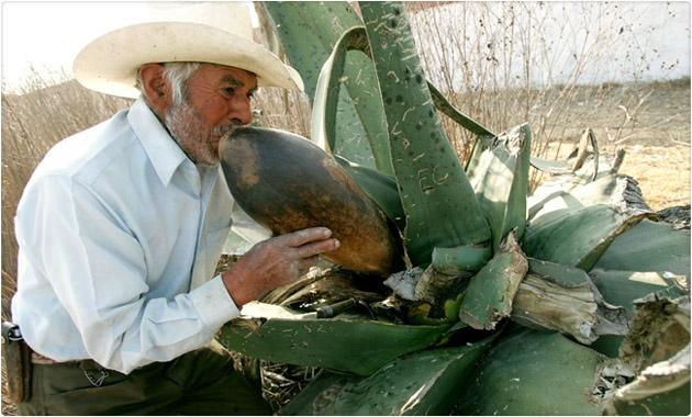 #Sabíasque El pulque era usado como suplemento dietético