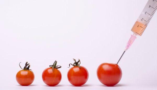 5-alimentos-geneticamente-modificados-que-consumes-todos-los-dias-01