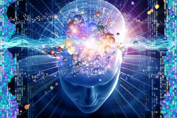 Brain_Large
