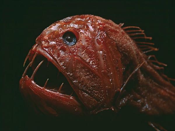 blobfish_PLYIMA20150610_0016_1
