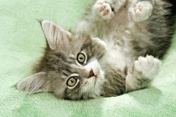 cats_cats_71