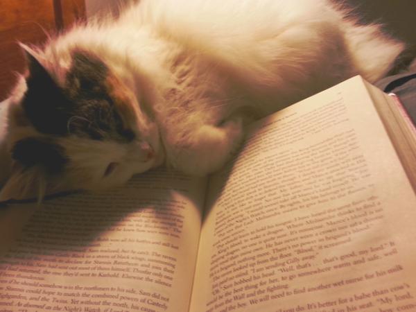 libros_PLYIMA20150715_0008_5