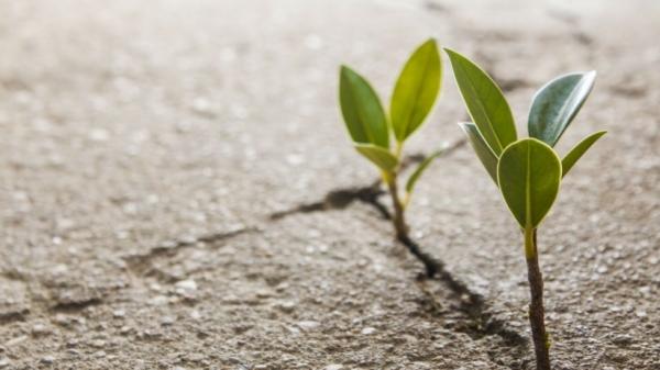 20160712151130-startups-verdes